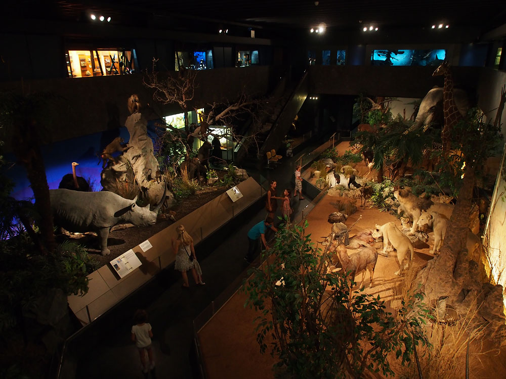 Geneva Museum of Natural History