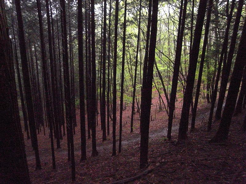 Maruyama Walk Opa Forest