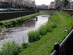 Nogawa spring awakening