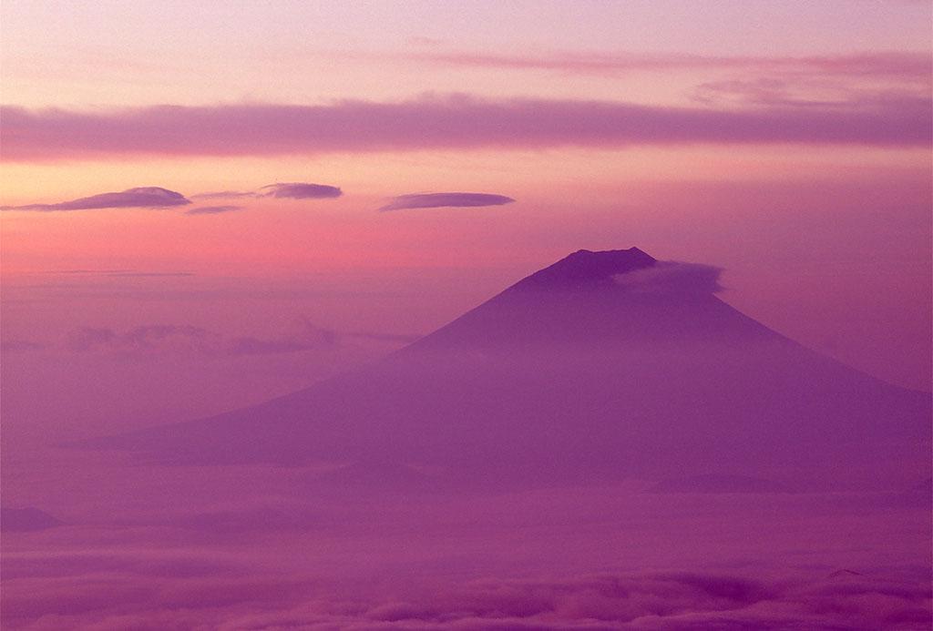 Lavender Fuji lg