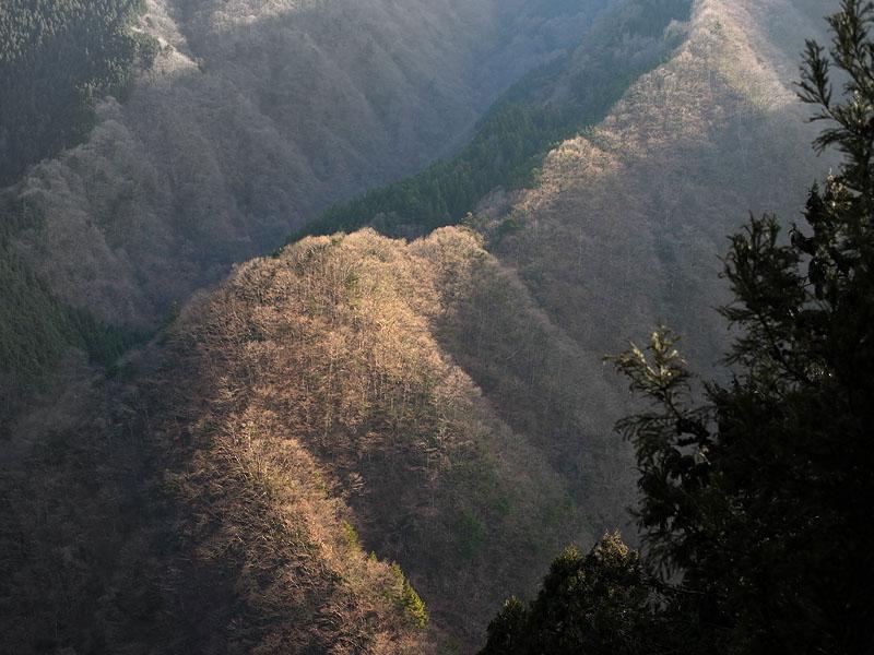 Okutama Mukashimichi Forested Ridges