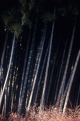 Shizuoka Bamboo Grove