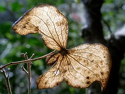 Dried leaf light
