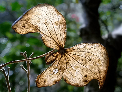 Dried leaf light