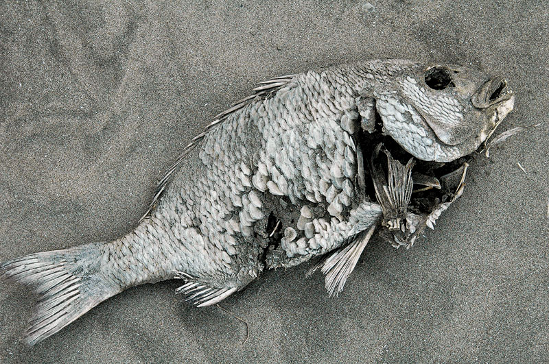 Motosuka Fish