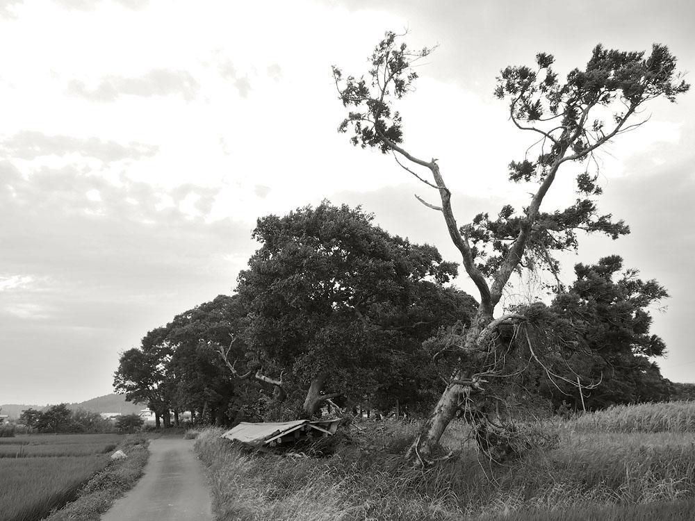 2012/07/14 Naruto Walk Windy Road