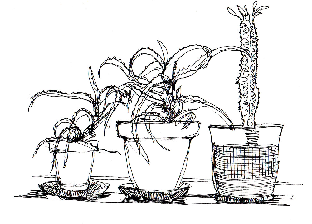 domestic_plant_studies 001