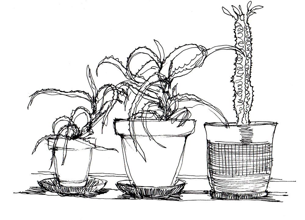 domestic_plant_studies 001
