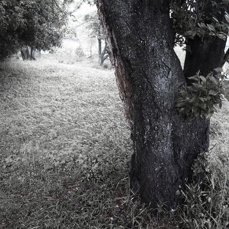maruyama_walk_004