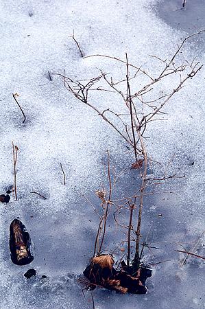 Mikuni ice debris 1