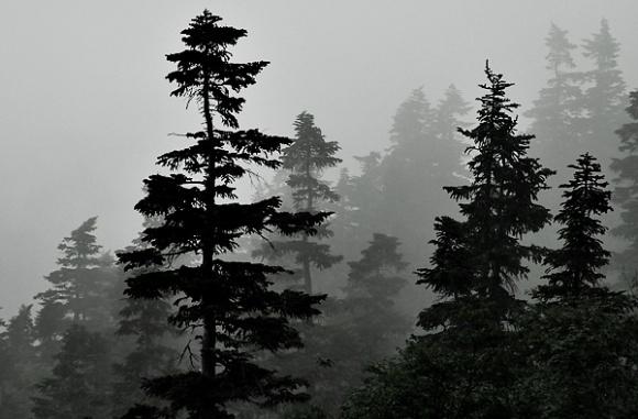 Kurobegoro Forest