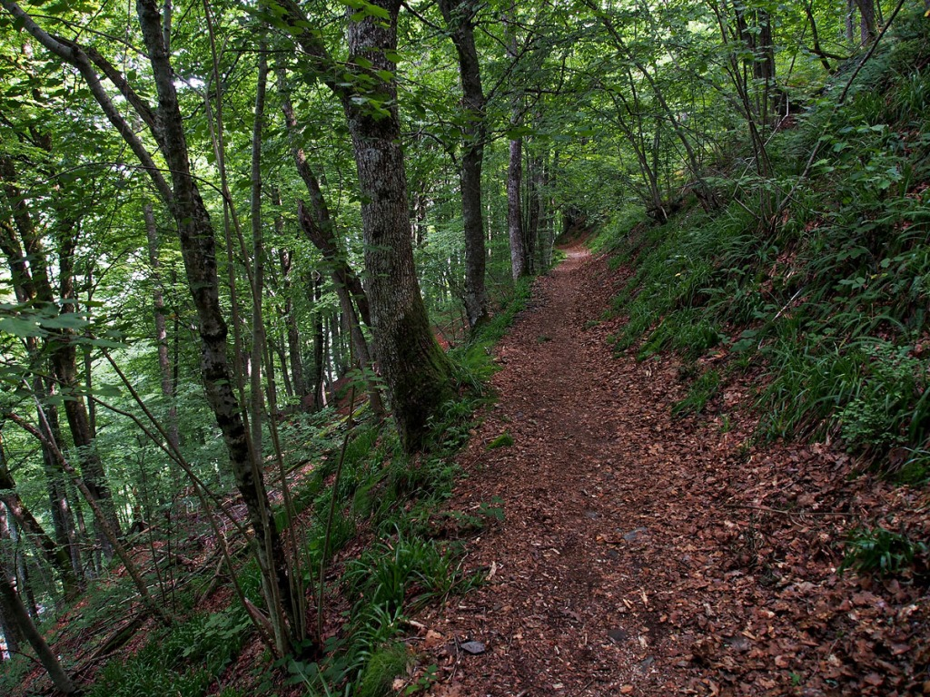 Lescun to Borce Forest Path