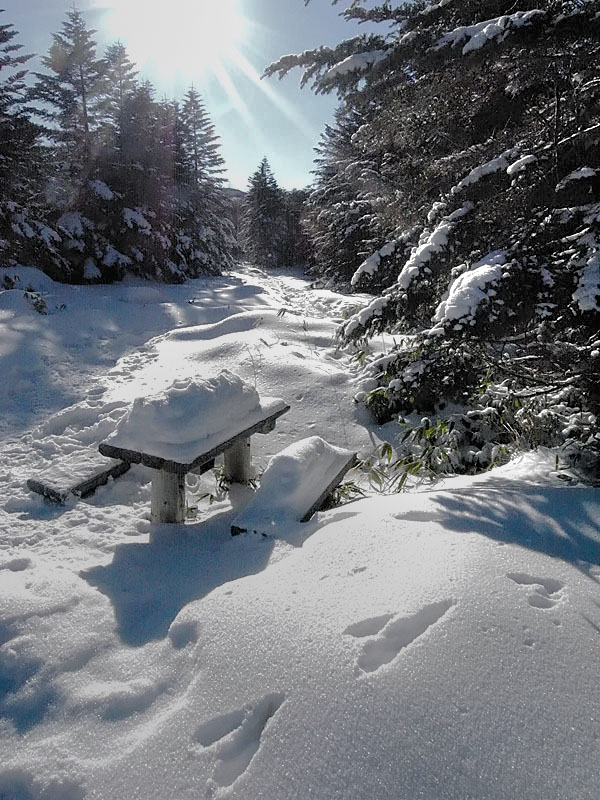Winter Yatsugatake Hare Tracks and Table