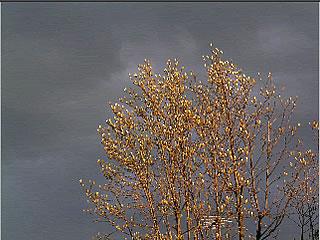 Magnolia Storm