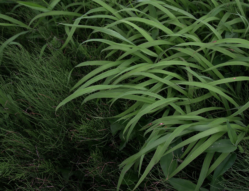 2012/07/14 Naruto Walk Evening Grass