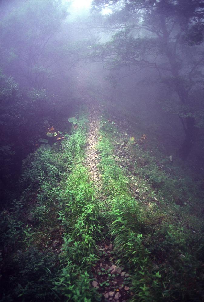 Tanzawa Mist Trail