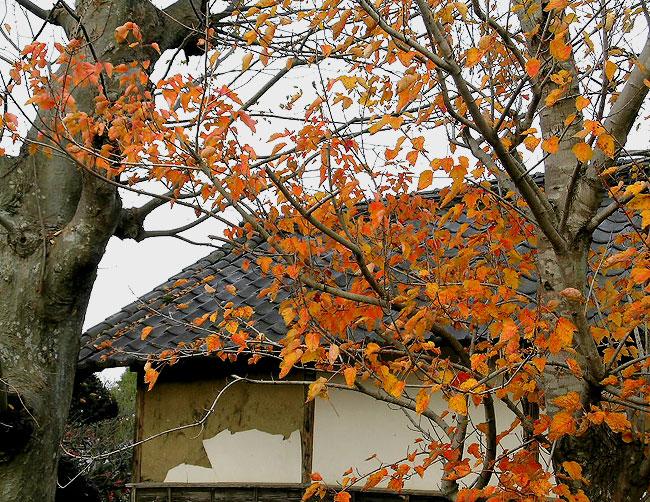 Gumyo Beech Roof