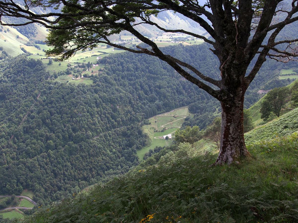 Lescun Abiding Tree