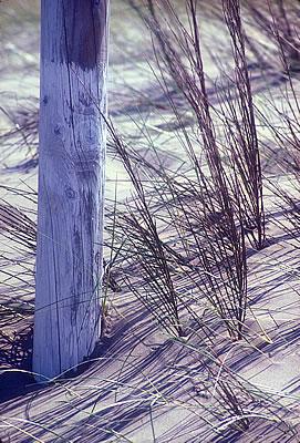 Beach pole Oregon
