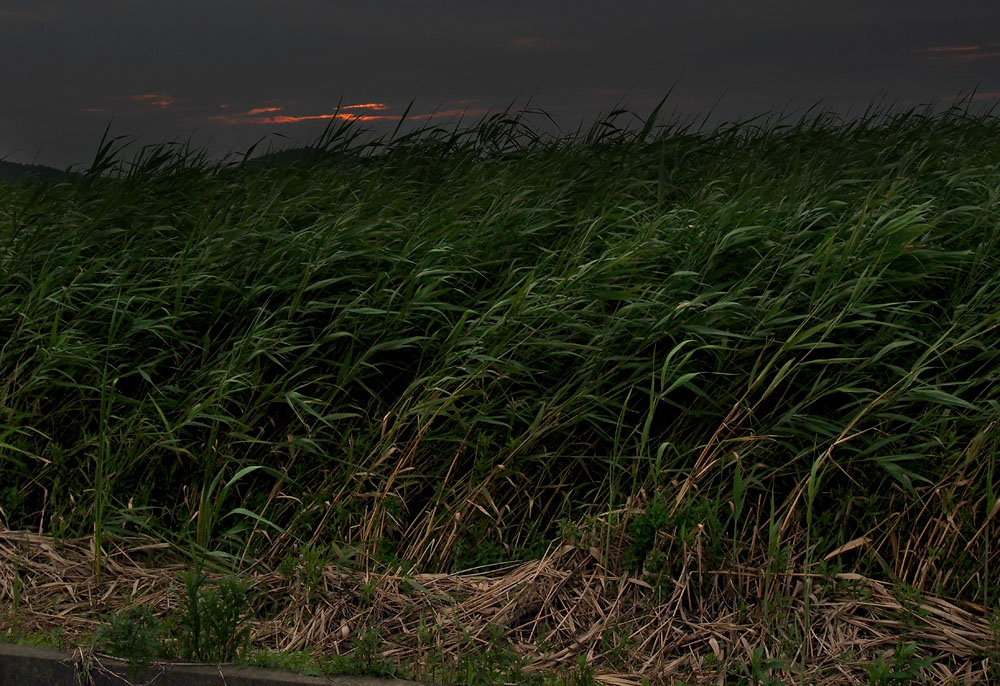 2012/07/14 Naruto Walk WIld Grass at Sunset