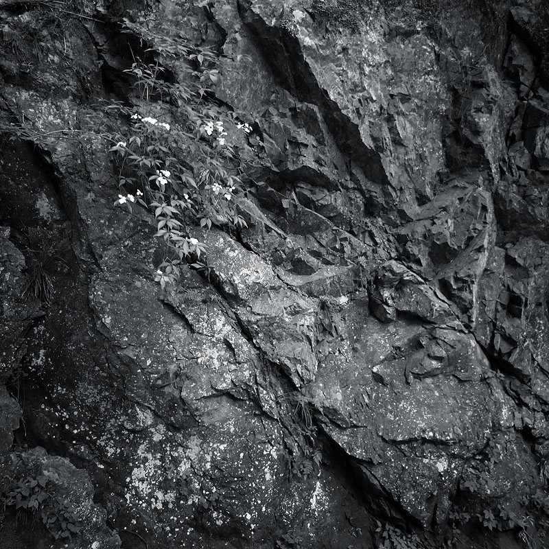 Mukashi Michi Rocks 1