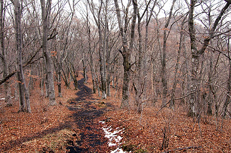 Mikuni beech trail
