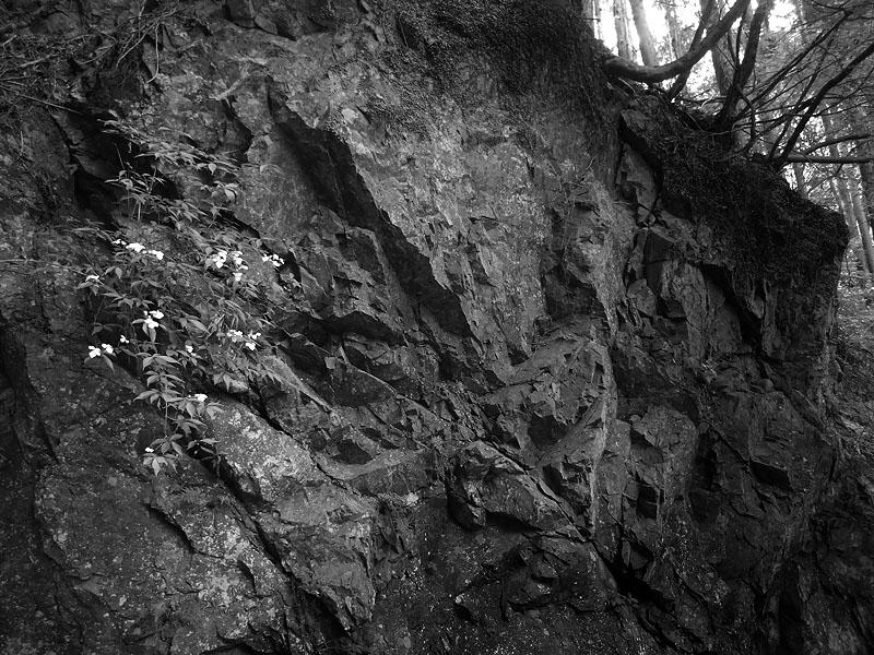 Mukashi Michi Rocks 2