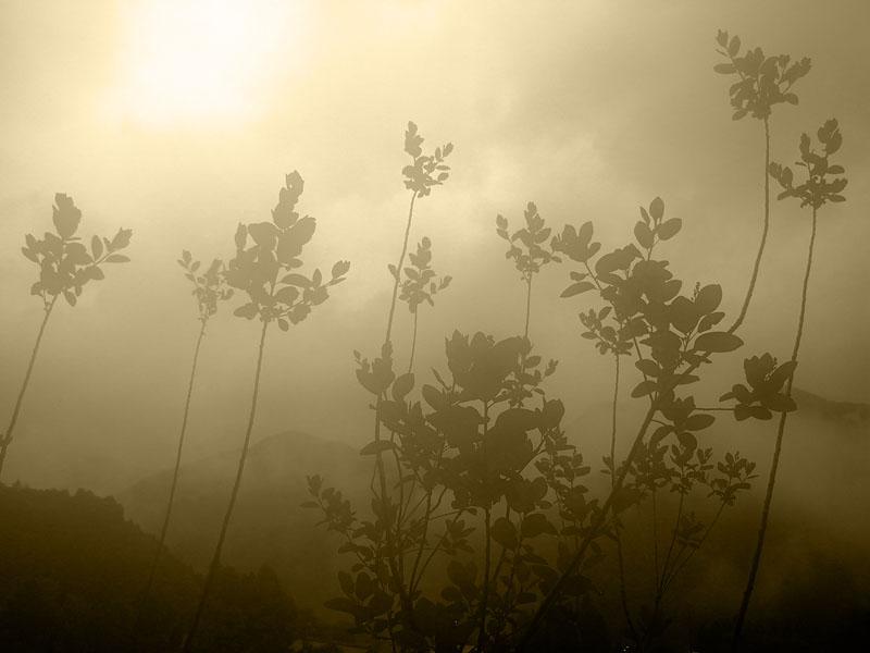 Maruyama Walk Misty Leaves Sepia