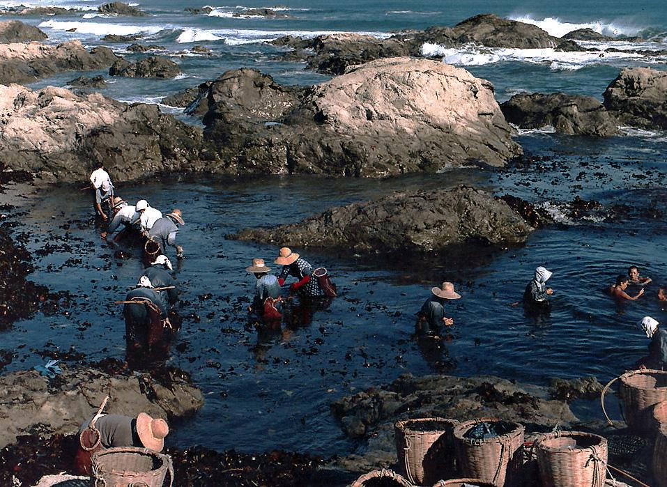 Seaweed Gatherers