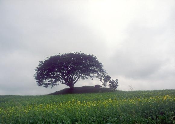 Tree Dolmen Denmark