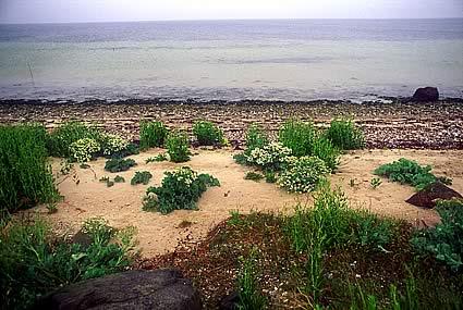 AEro Beach Life