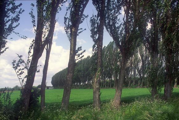Windbreaks Holland