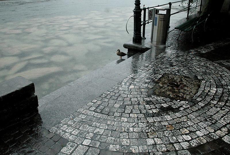 Luzern Duck 2