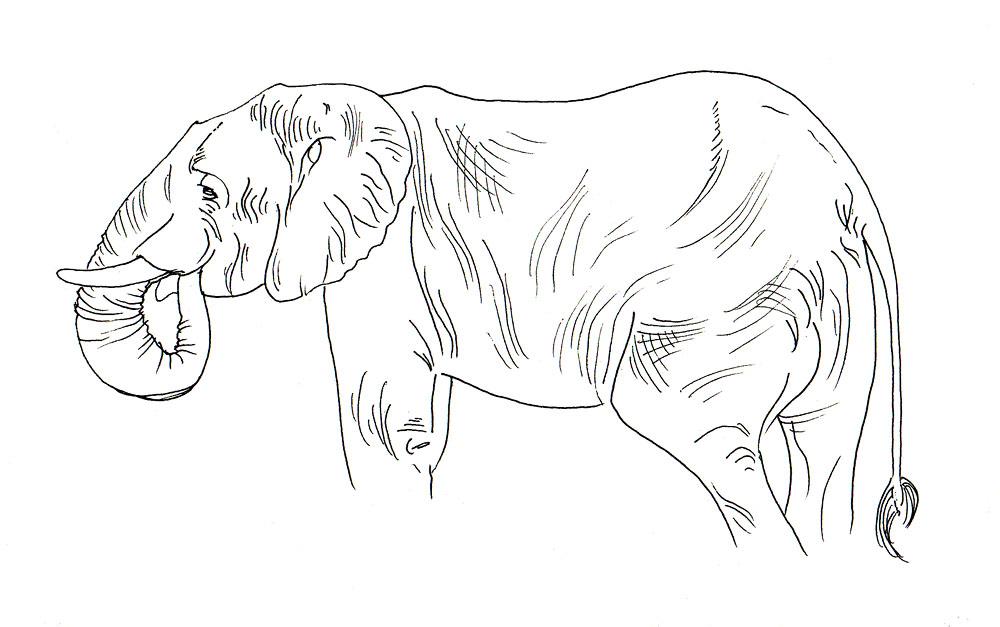 animal_studies_singapore_zoo_african_elephant