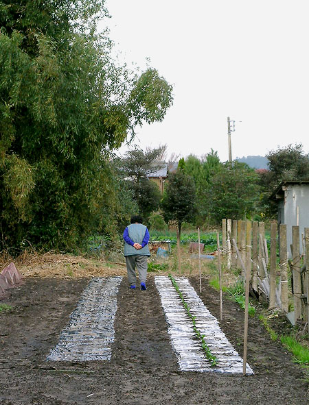 Gumyo Farmer