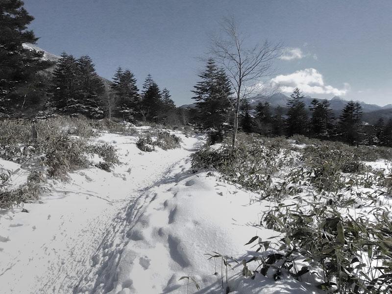 Yatsugatake Track