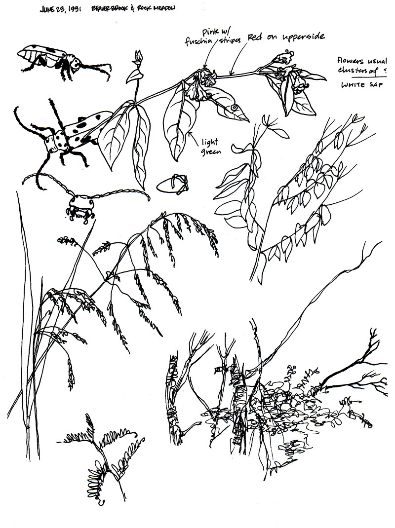 field_notes_001_rock_meadow_massachusetts_1991