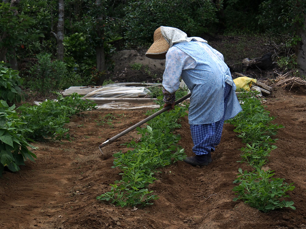2012/07/14 Naruto Walk Farmer Woman Hoeing