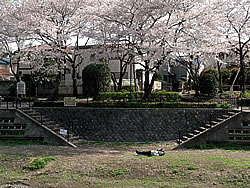 Sleeping sakura Nogawa
