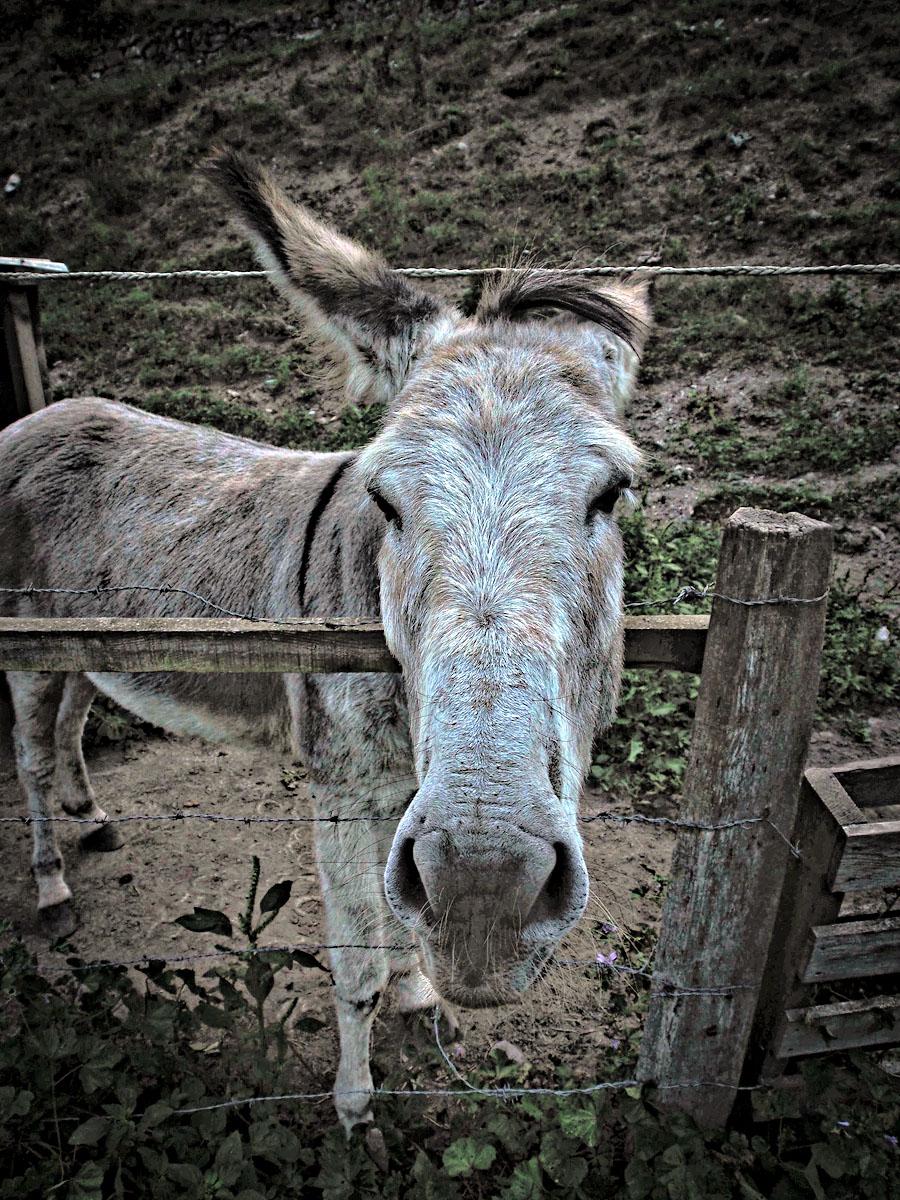 Chemin de la Matûre Donkey