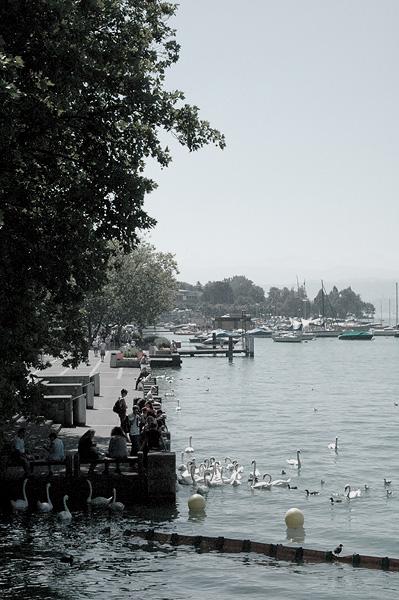 Zürich Swans