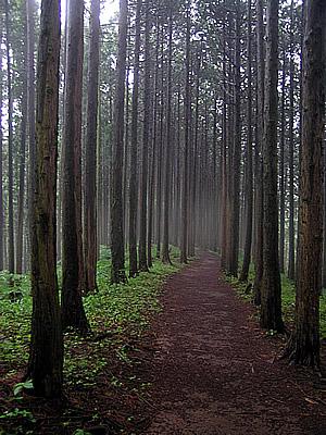 Jinbasan Rain Walk