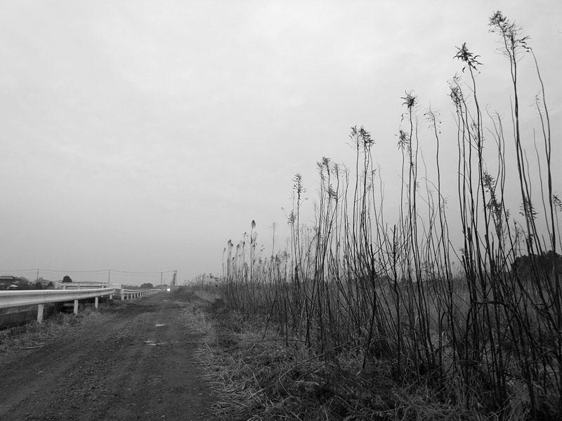 Naruto Sad Reeds