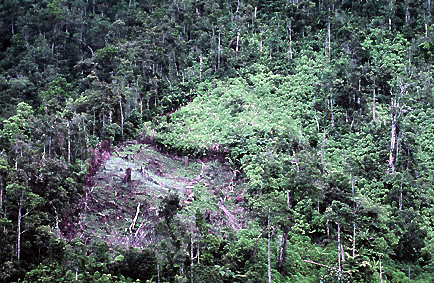 Clearcut Philippines