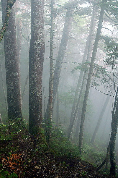 Senjo mist woods