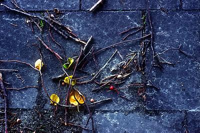 Sidewalk Debris
