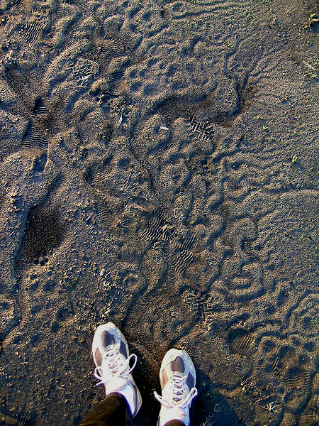 Gumyo Footprints