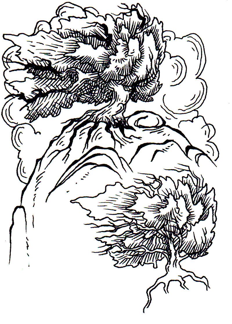 lk_studies_002_windblown_trees