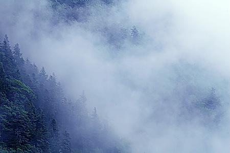 Senjo mist rising