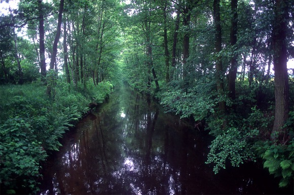 Wooded Canal Germany